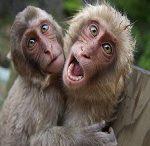 داستان کوتاه میمون ها